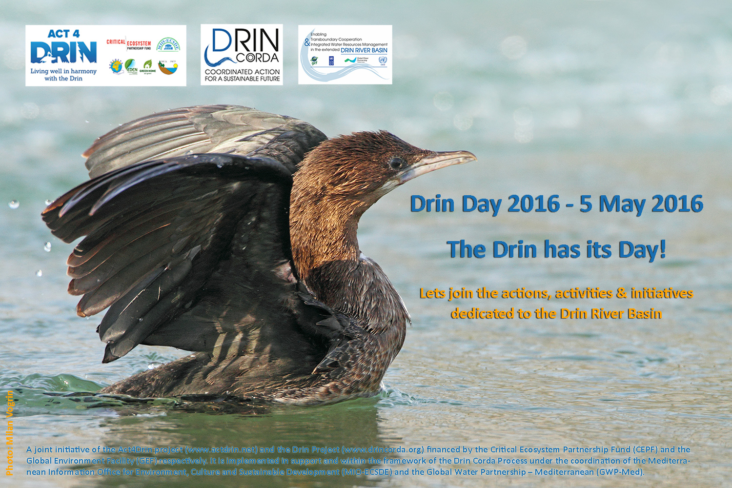 Drin Day 2016